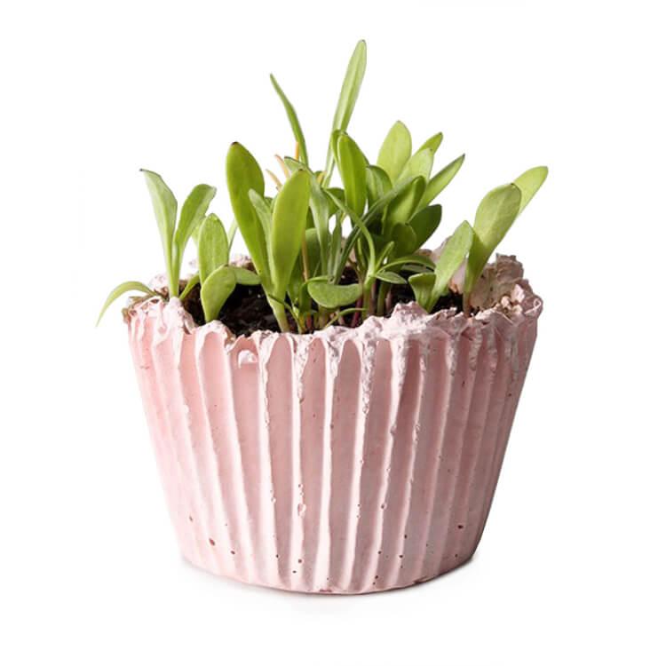 Uncommon Goods Cupcake Planter Let's Eat Grandpa