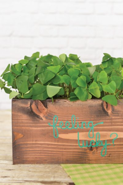 Are you feeling lucky? Find the four-leaf clover in this cute DIY planter! A fun St. Patrick's Day project that will have everyone at your house searching for shamrocks.