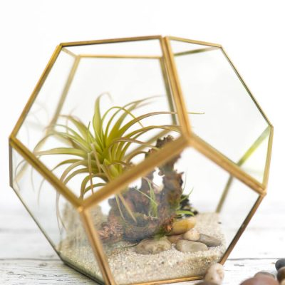How to Make a No-Maintenance DIY Terrarium