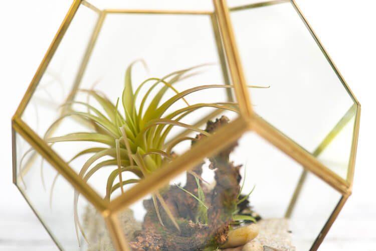 How to Make a No-Maintenance DIY Terrarium