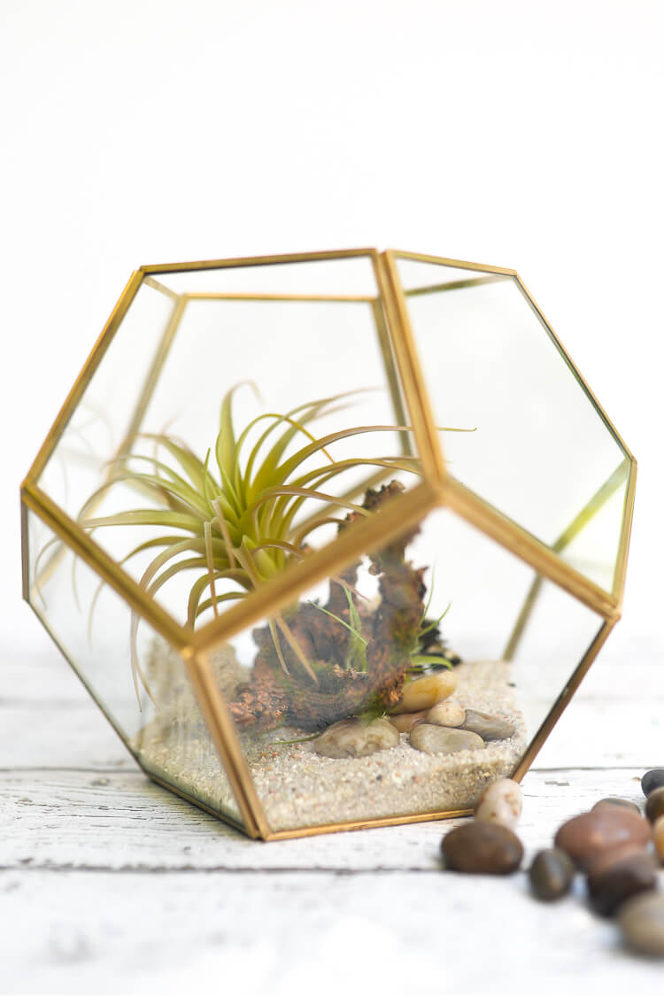 Learn how to create a maintenance-free terrarium (plants you can't kill!) that can be customized to your decor.